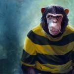 chimp_int_final